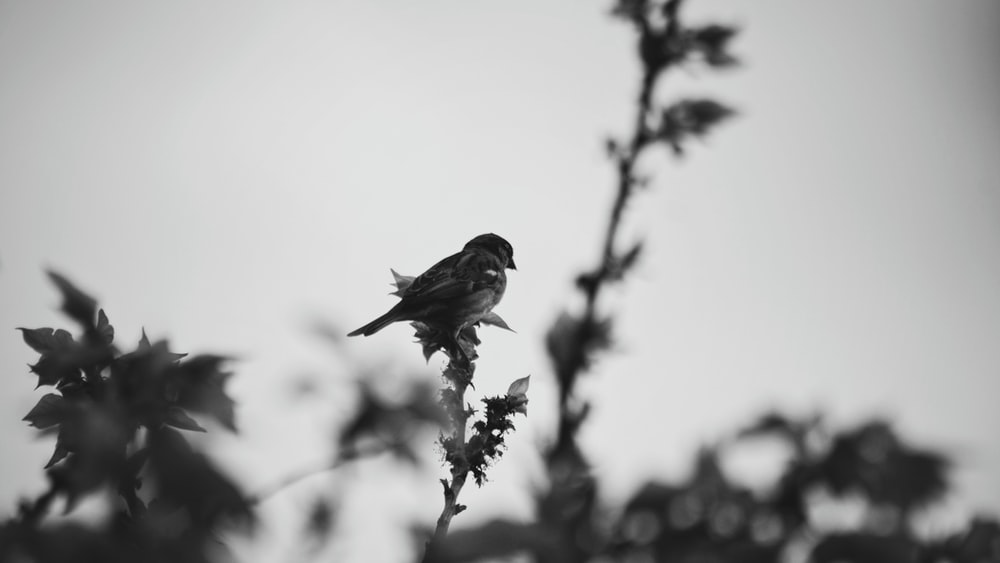 grayscale photo of bird perched on tree branch