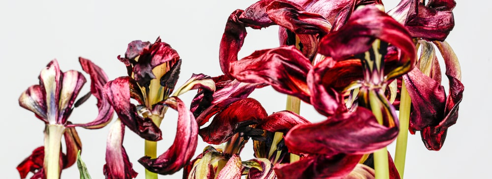 red and yellow flower petals
