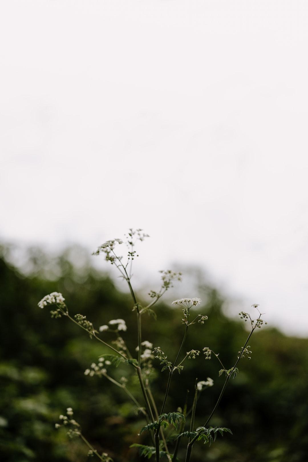 green plant under white sky during daytime