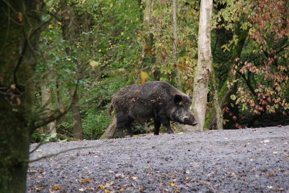 black 4 legged animal on gray concrete road during daytime