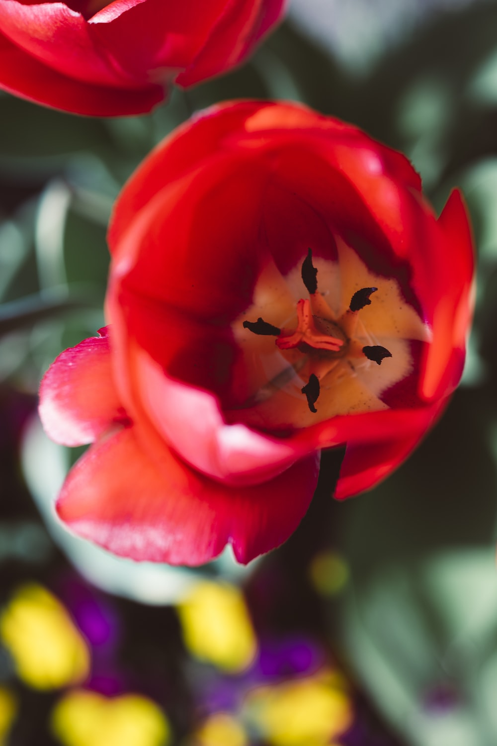 red and white flower in close up photography