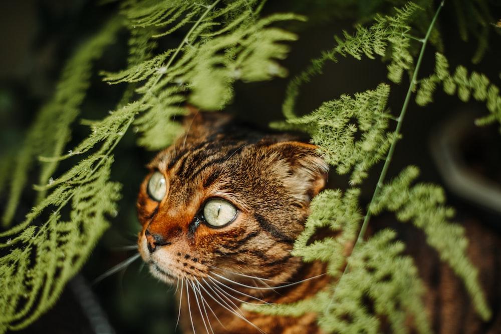 brown tabby cat on green tree