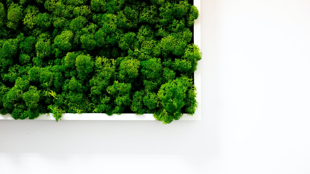 green tree on white wall