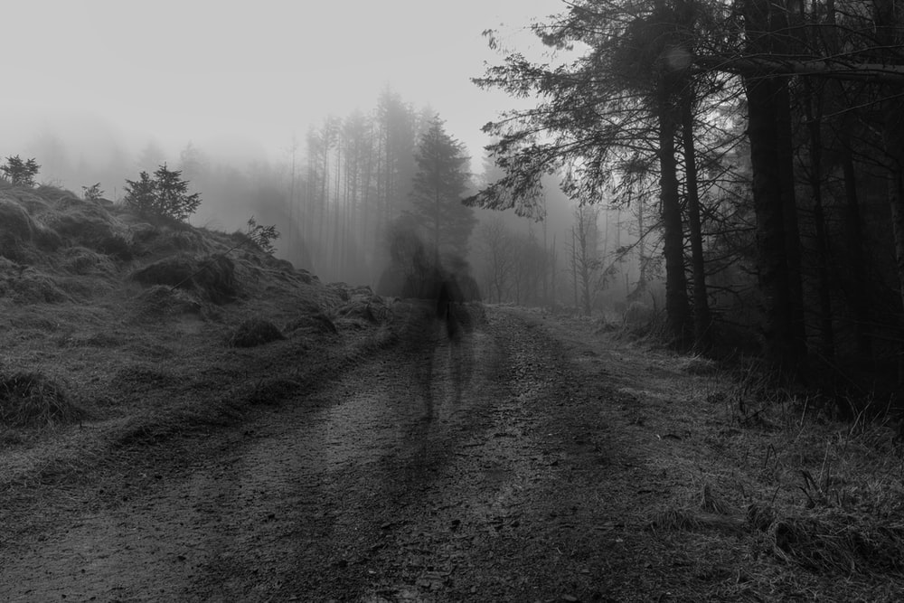 grayscale photo of person walking on pathway between trees
