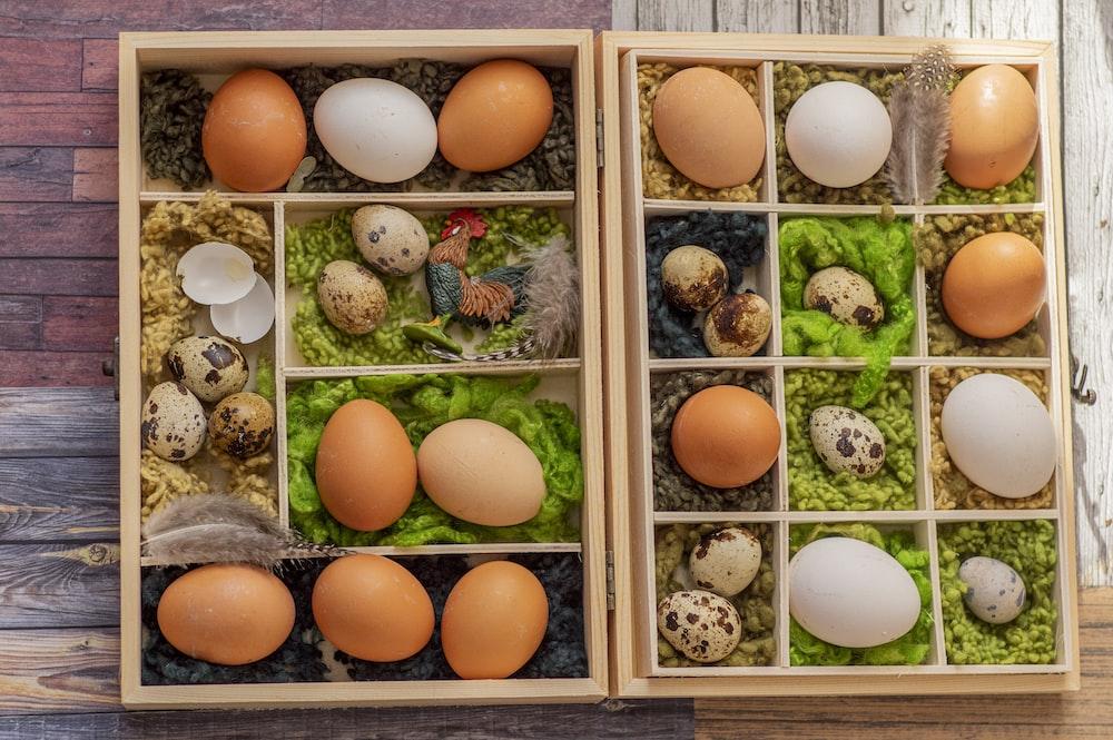 brown egg on white wooden shelf