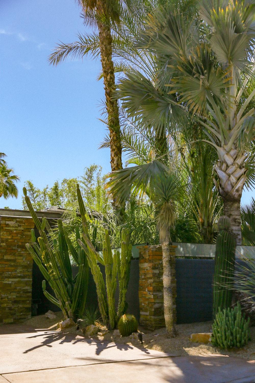 green palm tree near brown brick wall