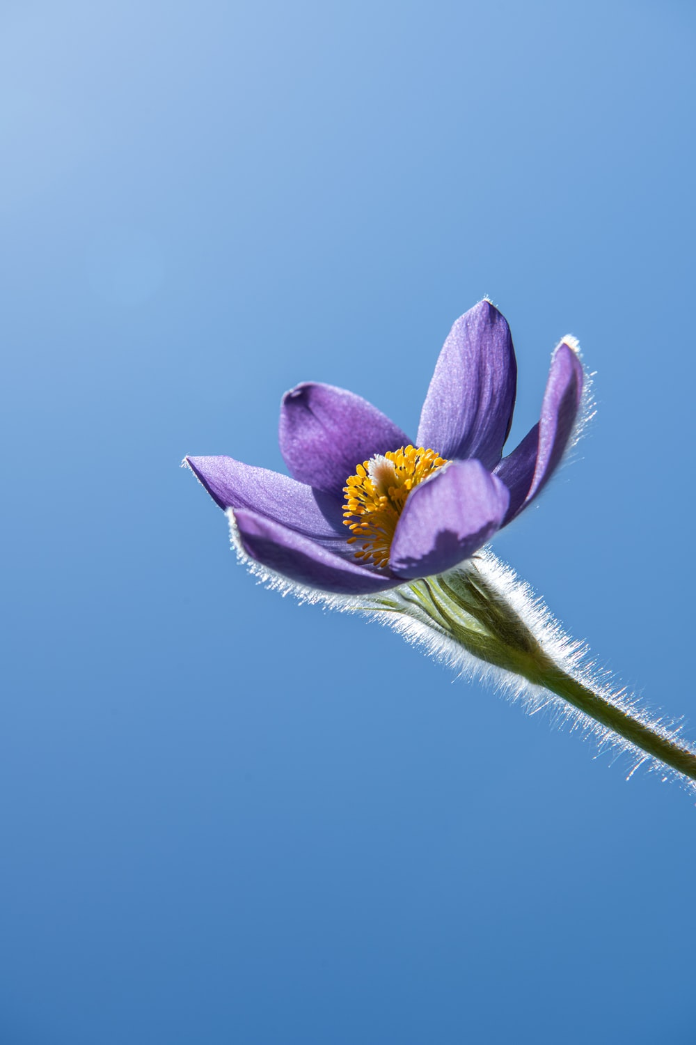 purple and yellow flower under blue sky
