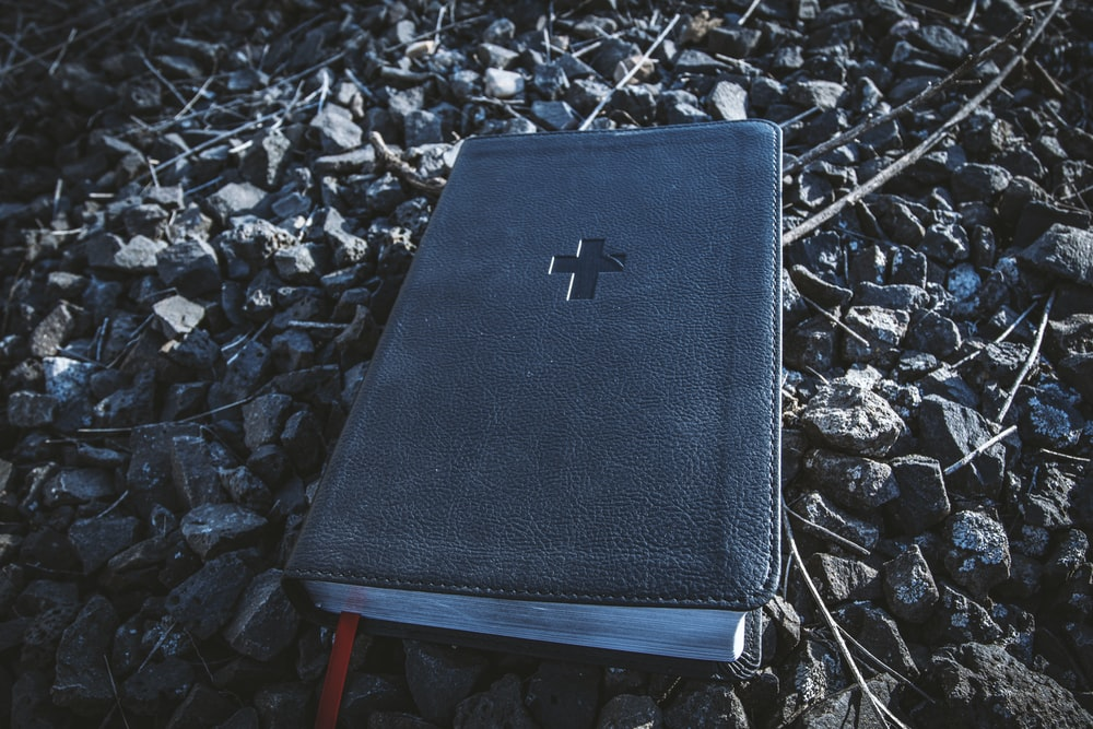 black leather book on dried leaves