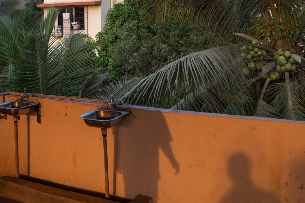 green palm tree near orange wall