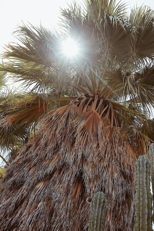 brown palm tree during daytime