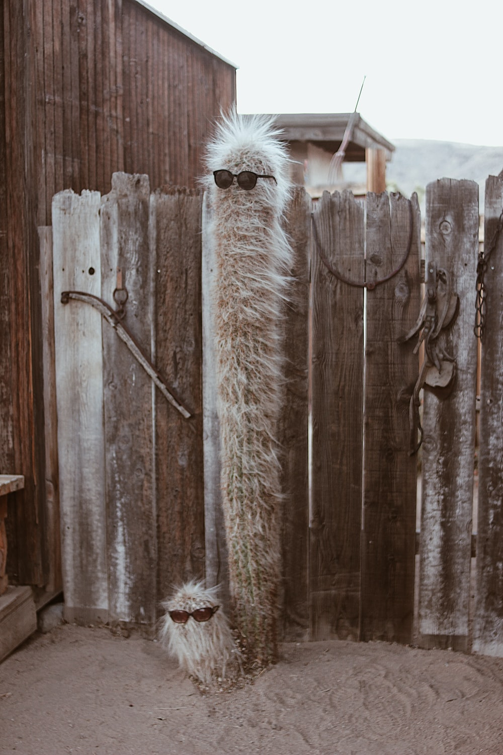 white fur animal on brown wooden fence