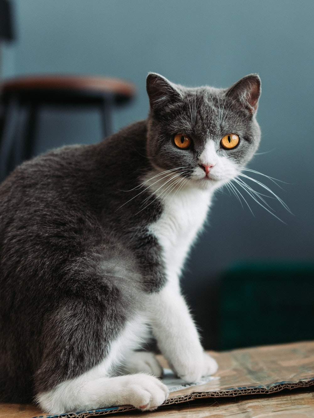 black and white cat on brown wooden table