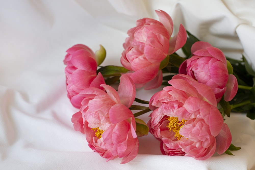 pink flowers on white textile