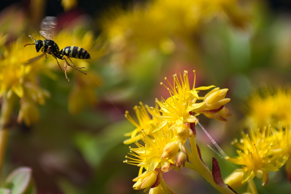 black and yellow bee on yellow flower
