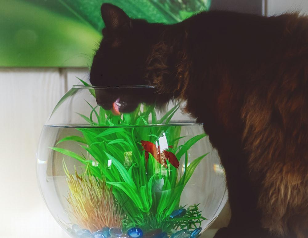 black cat on blue plastic container