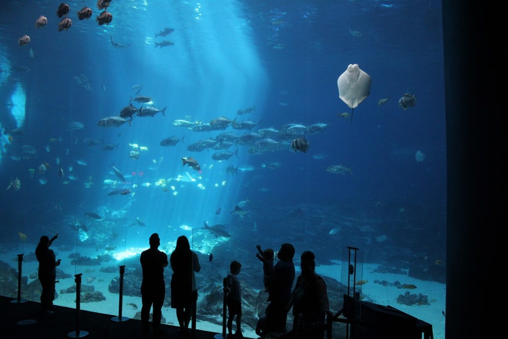 silhouette of people standing in front of aquarium with white fish