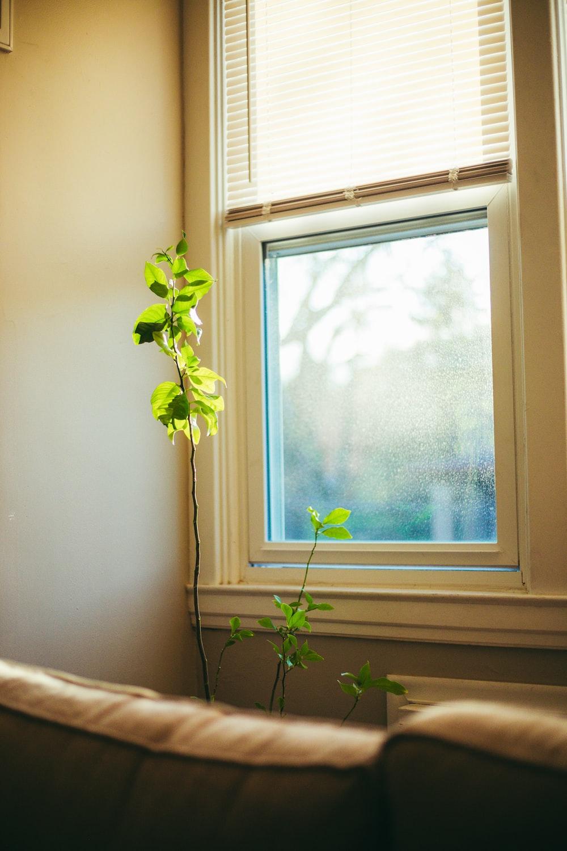 green plant on white window
