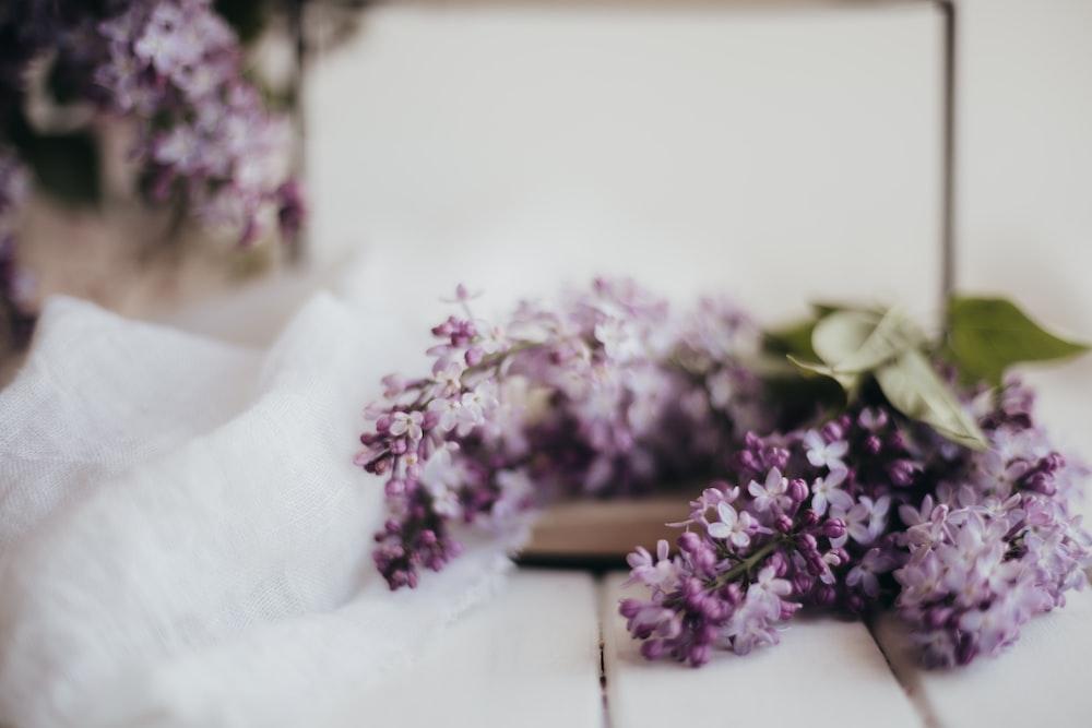 purple flowers on white table