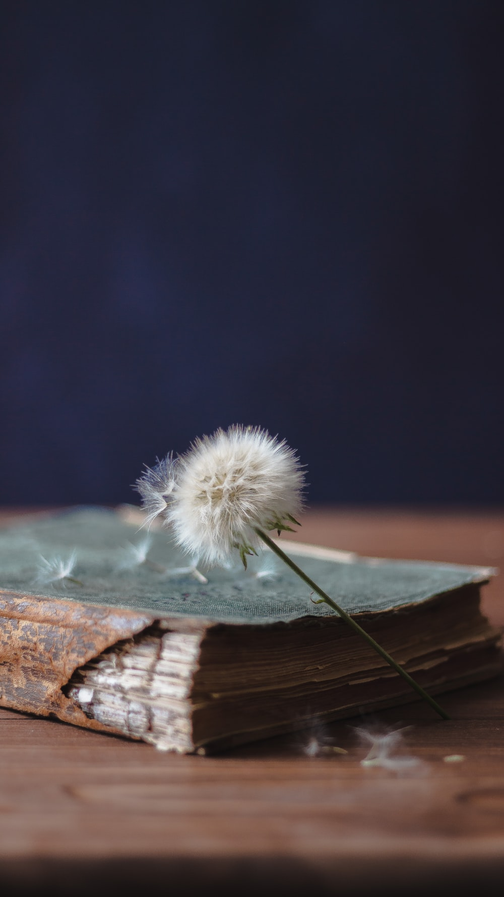 white dandelion on brown wooden surface