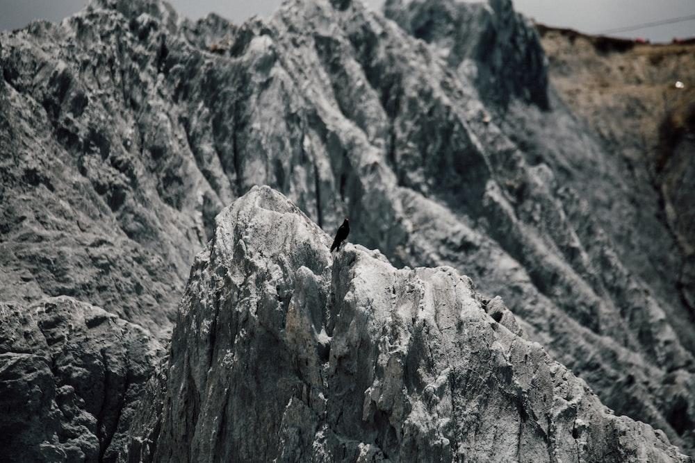 black bird on gray rock formation during daytime