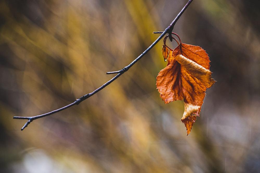 brown leaf on black wire