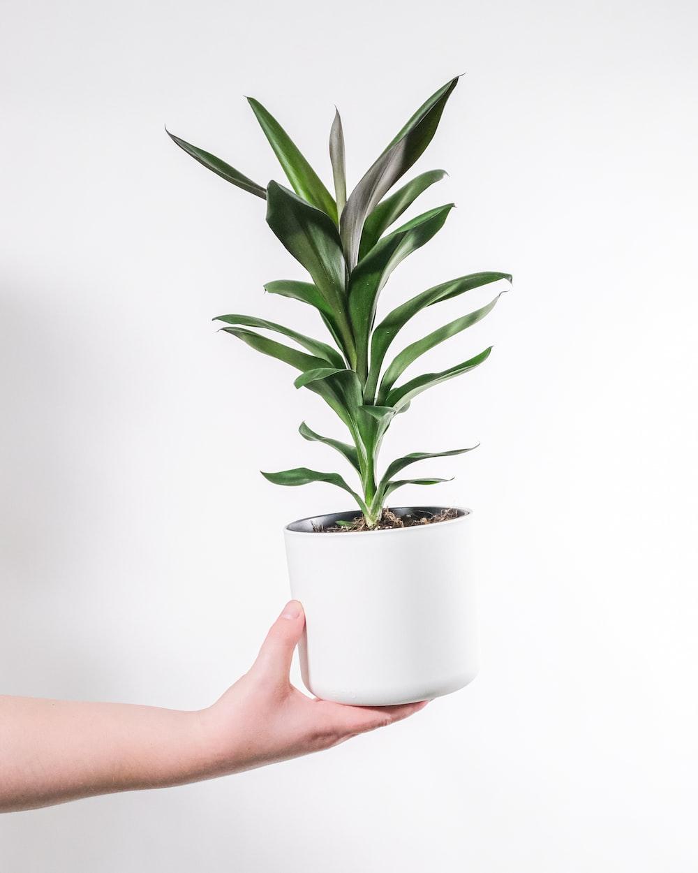 person holding green plant on white ceramic pot