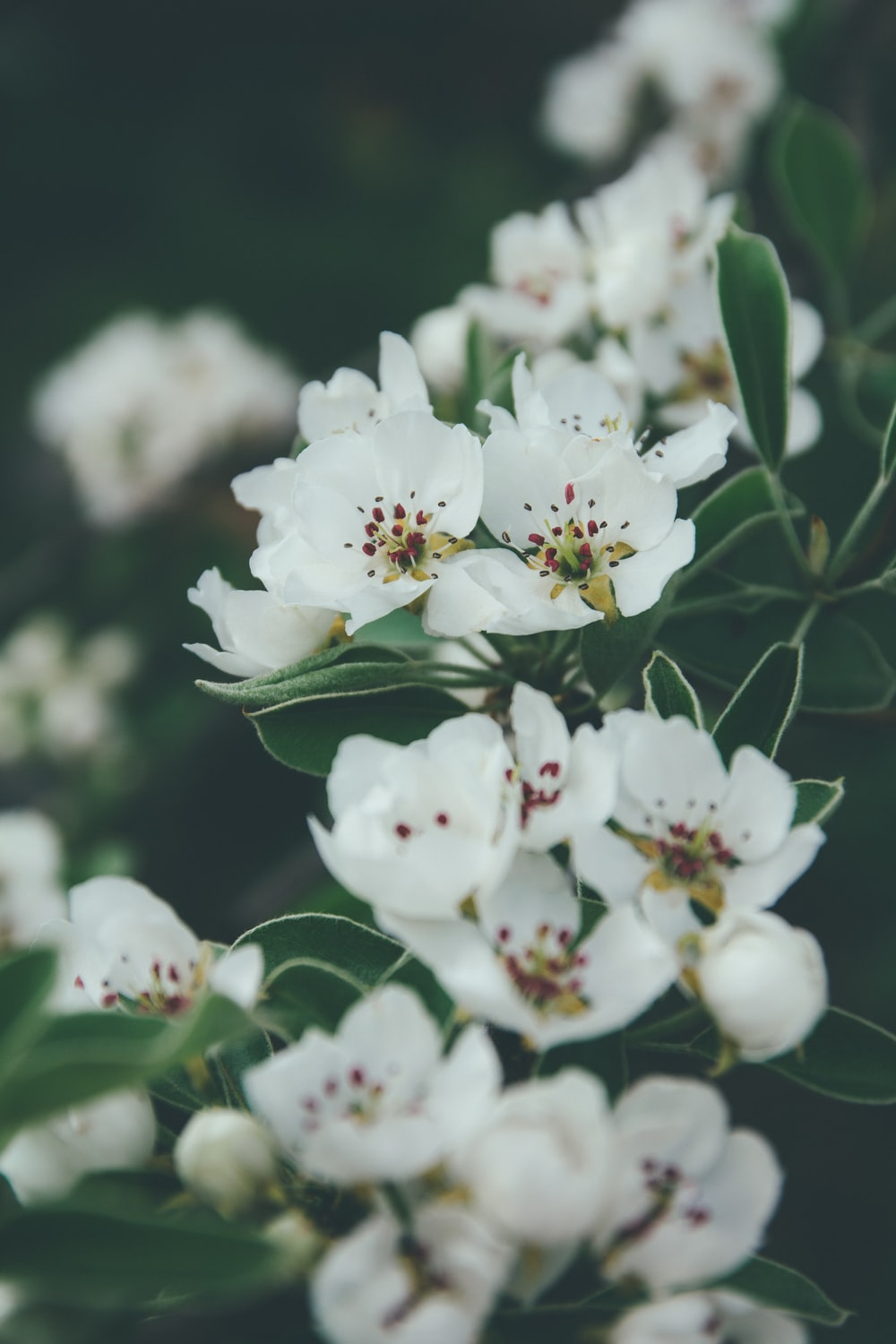 white flowers with green leaves