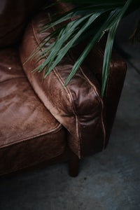 green plant on brown leather armchair
