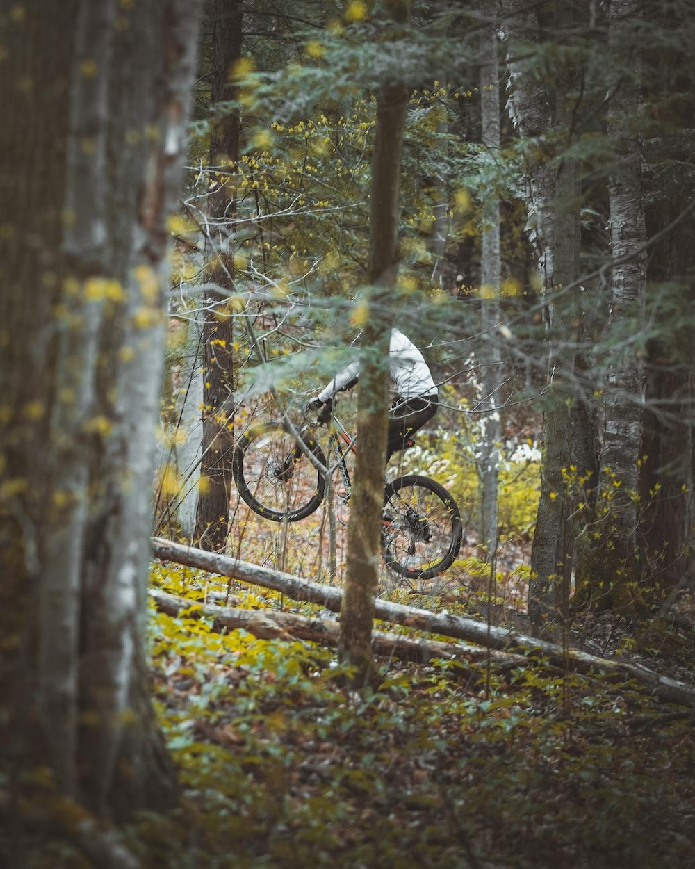 black bicycle on brown tree trunk