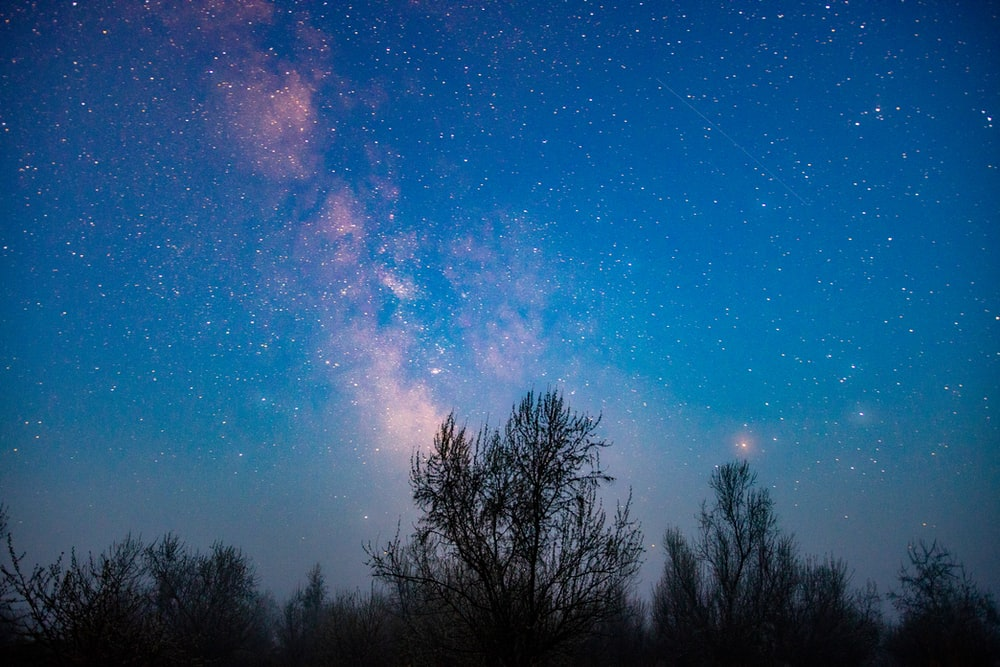 silhouette of trees under blue sky with stars during night time