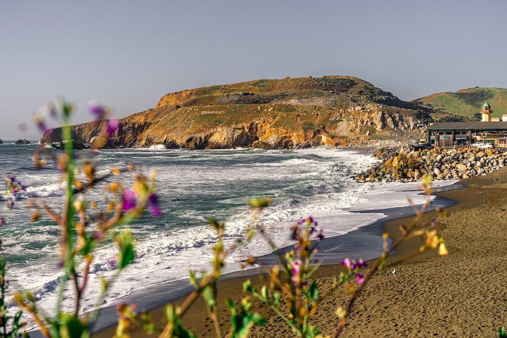 purple flowers on seashore near brown mountain during daytime