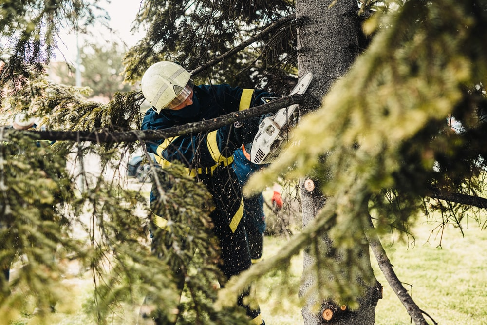 man in black jacket and white helmet climbing on tree during daytime