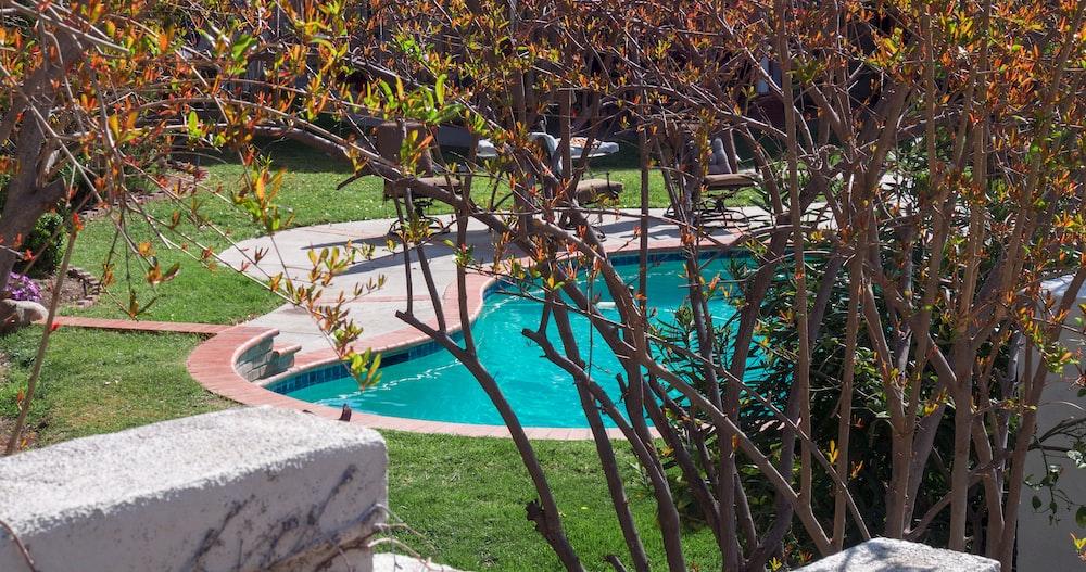 green leaf tree near swimming pool during daytime