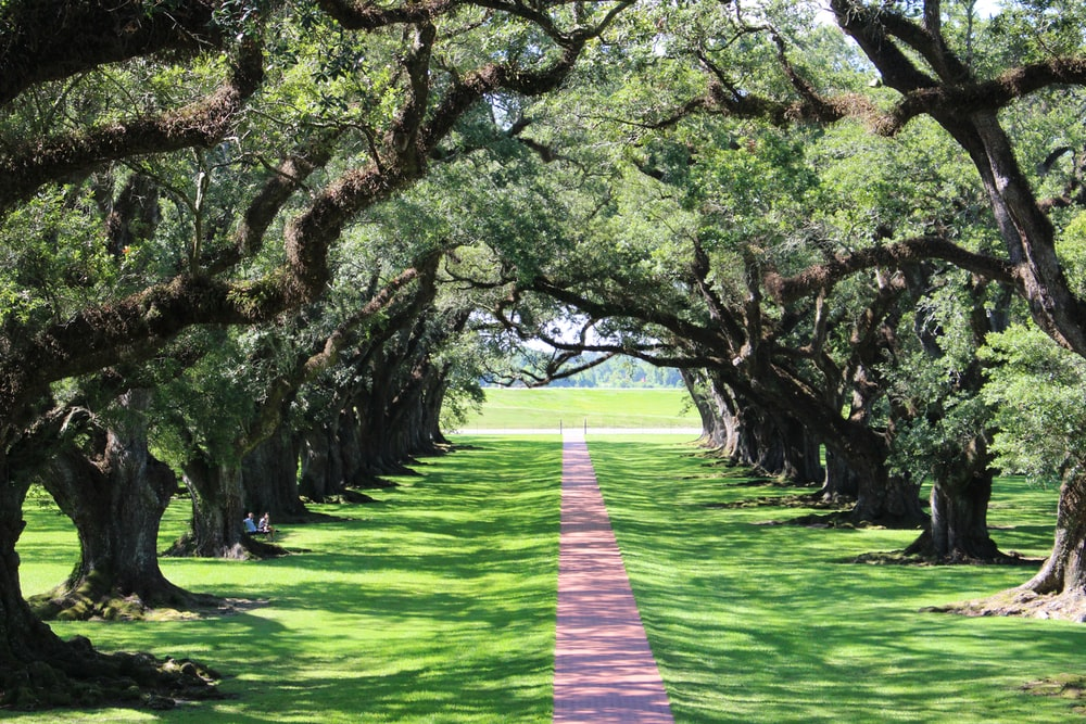 green grass pathway between trees during daytime