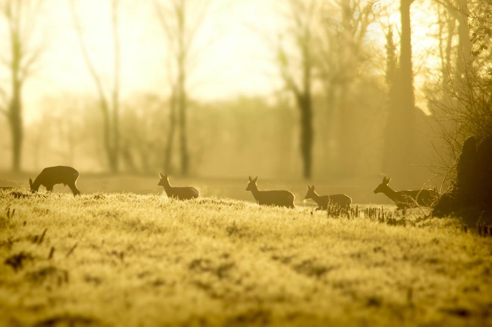 herd of deer on grass field during daytime