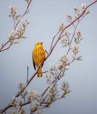 yellow bird perched on brown tree branch during daytime