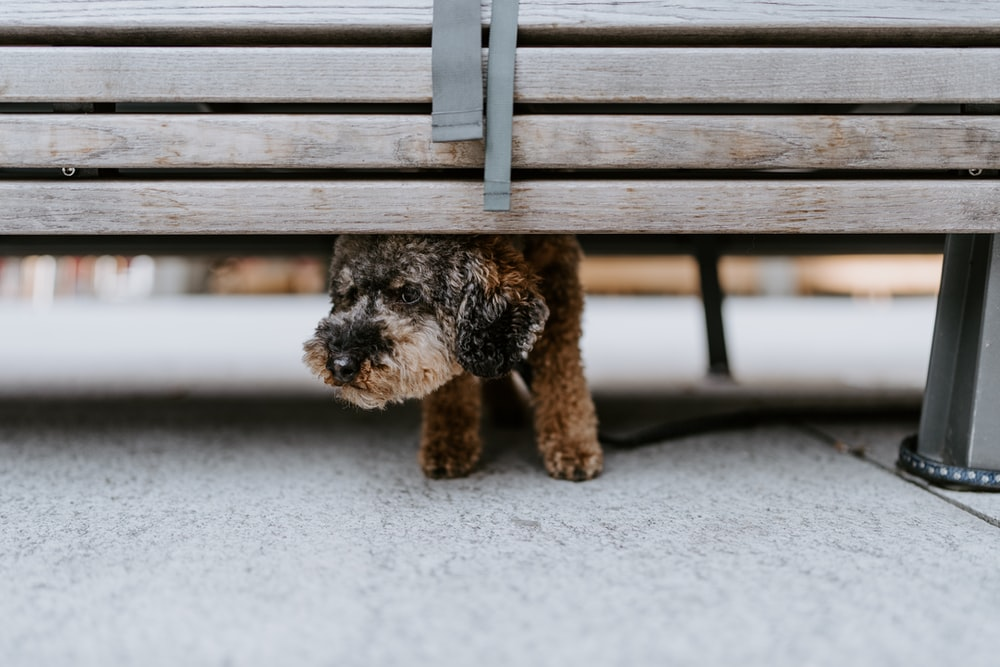 black and brown long coated small dog on brown wooden bench