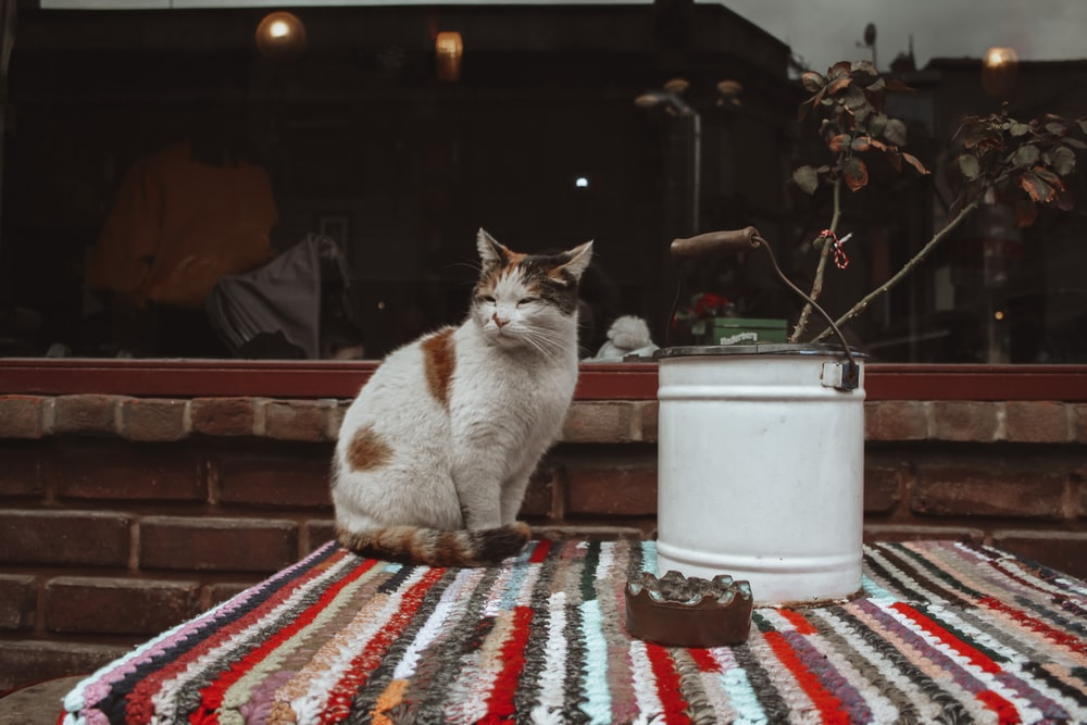 orange and white cat on red white and blue textile