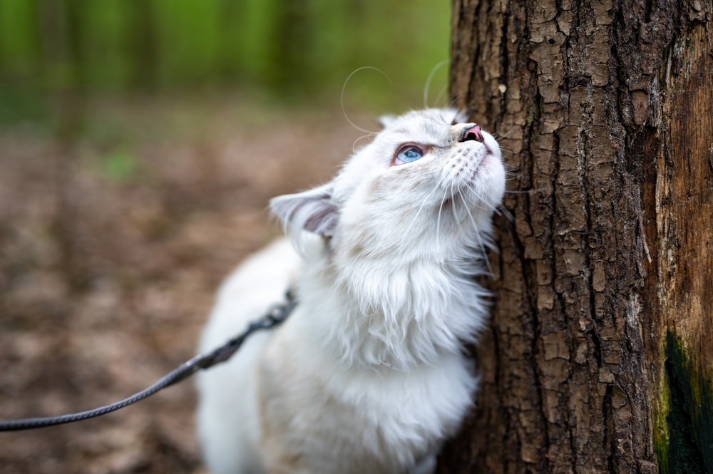 white cat on brown tree trunk