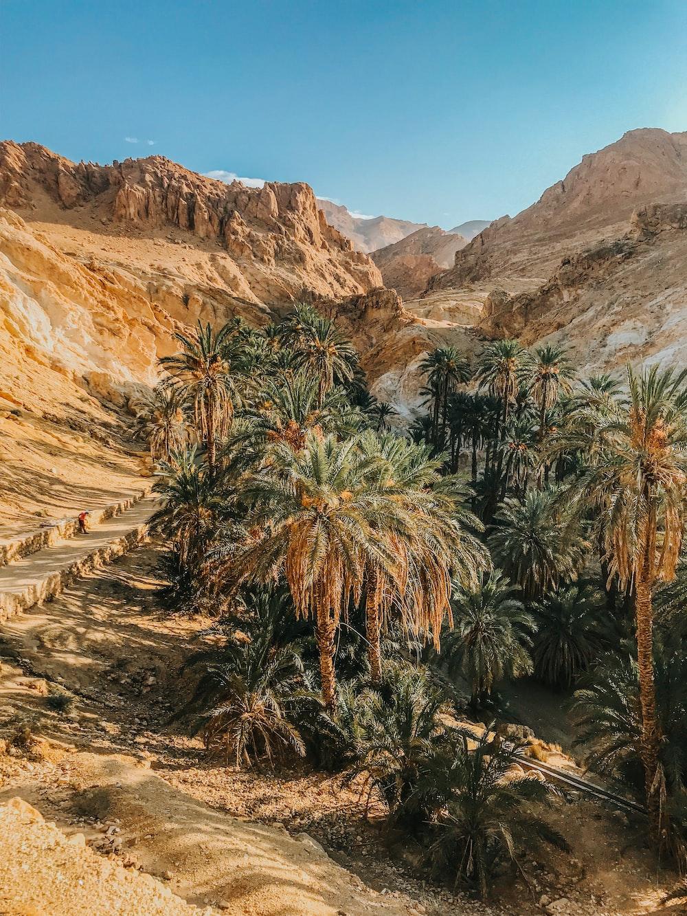 green palm tree near brown mountain during daytime