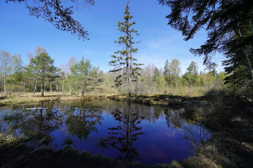 green trees beside river under blue sky during daytime