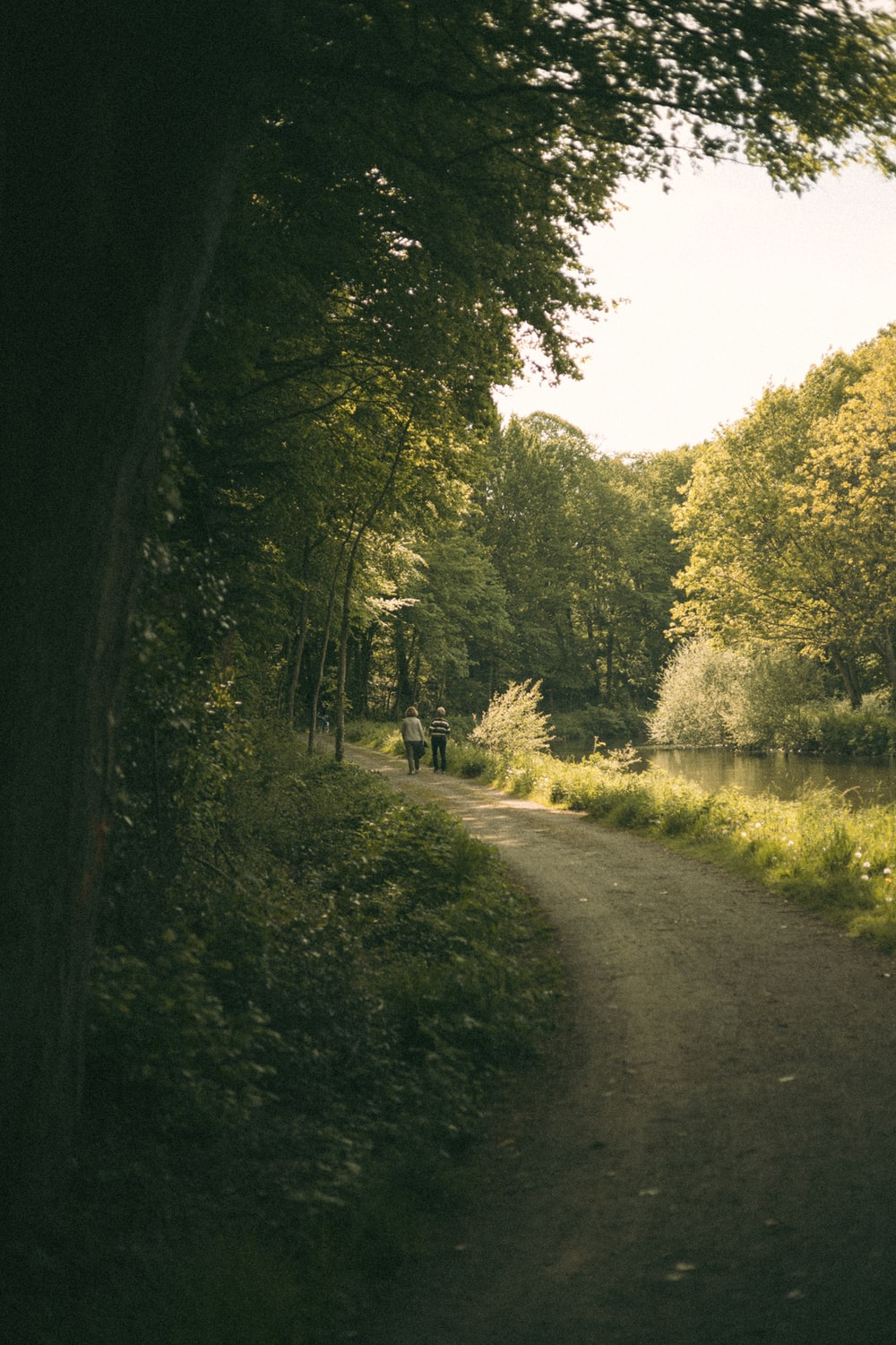 gray road between green trees during daytime