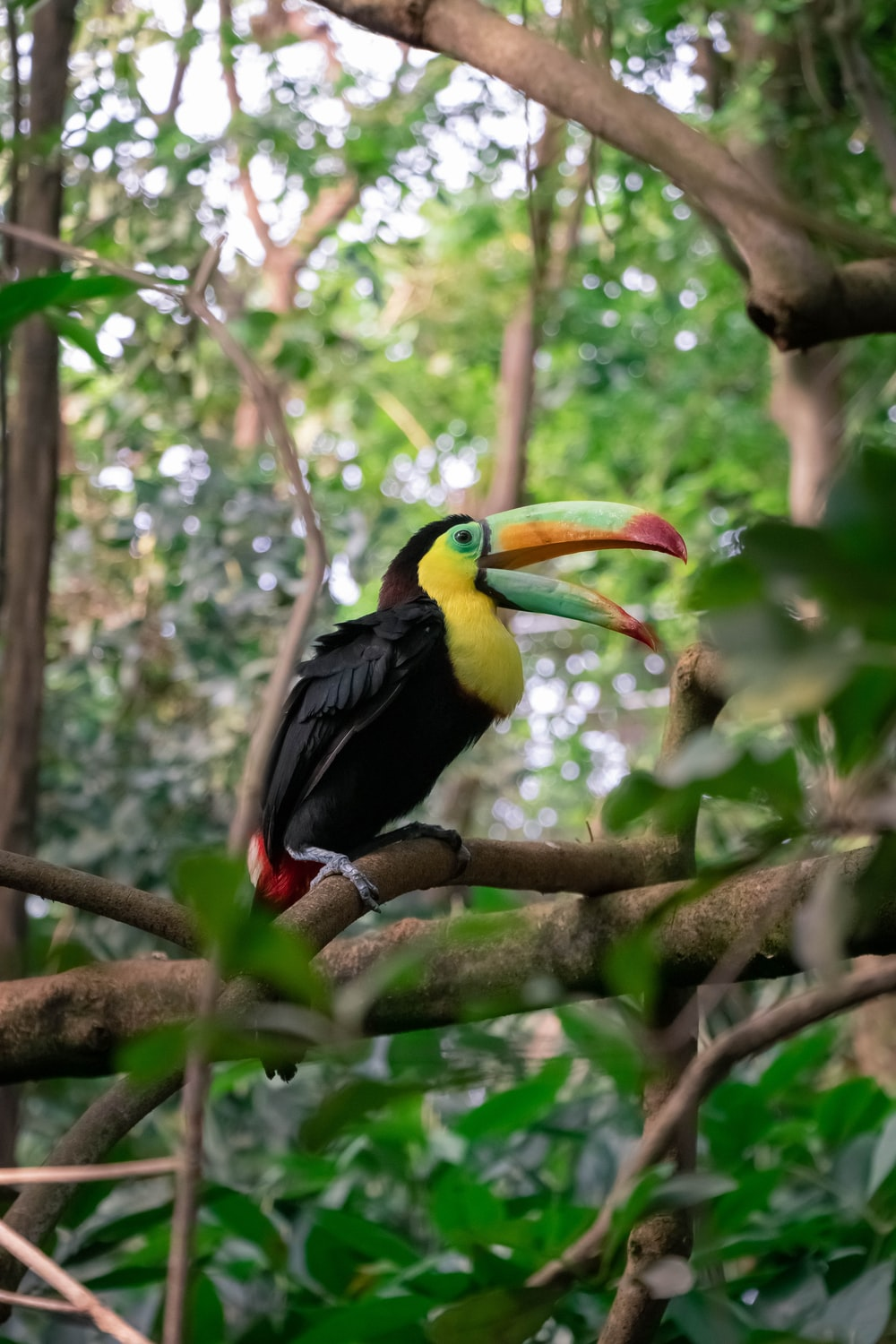 black yellow and red bird on brown tree branch during daytime