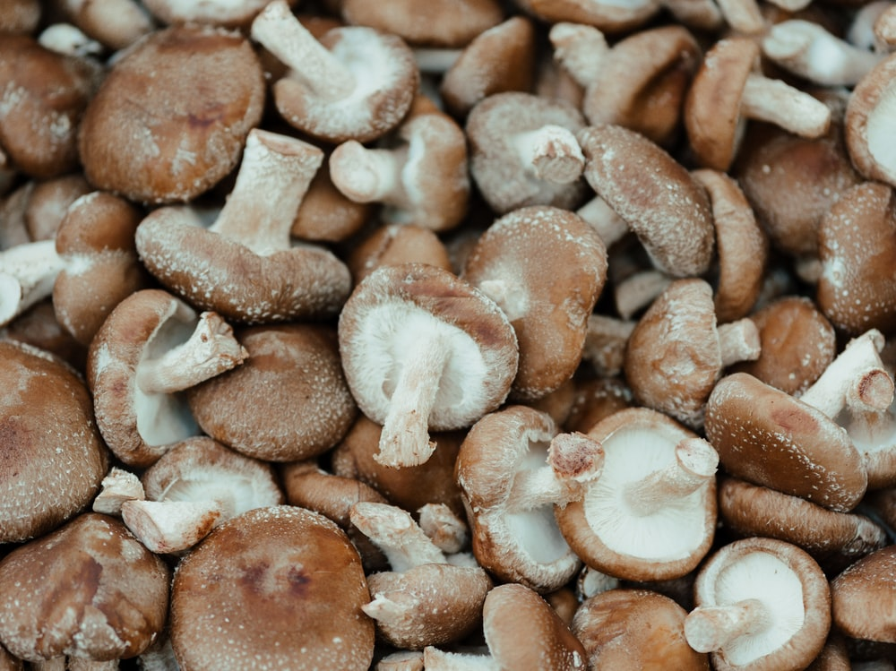 brown and white mushrooms on brown wooden surface