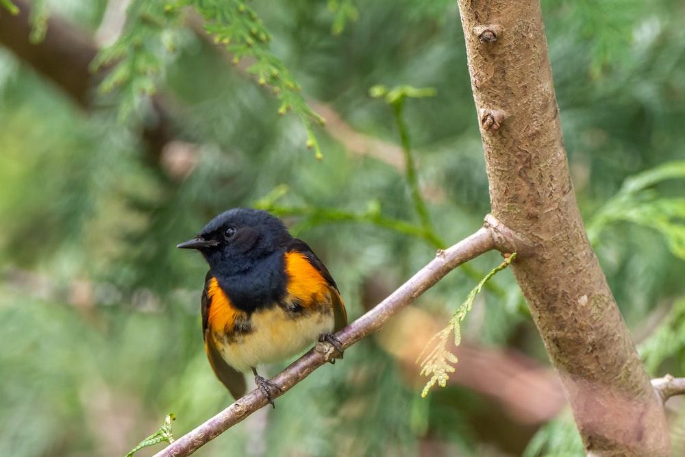 black orange and yellow bird on brown tree branch during daytime