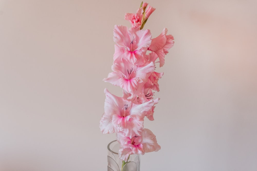 pink cherry blossom in clear glass vase