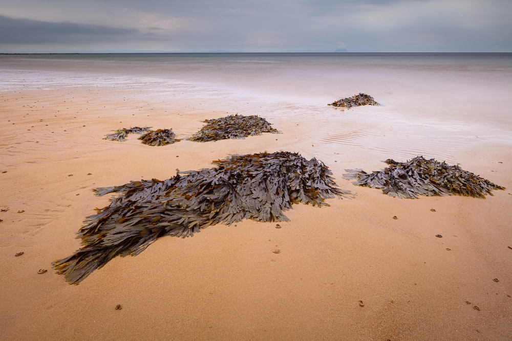 brown and black rock formation on beach during daytime