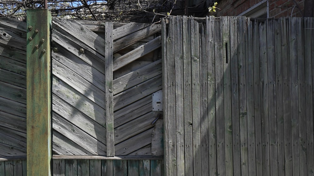 gray wooden fence near bare tree during daytime
