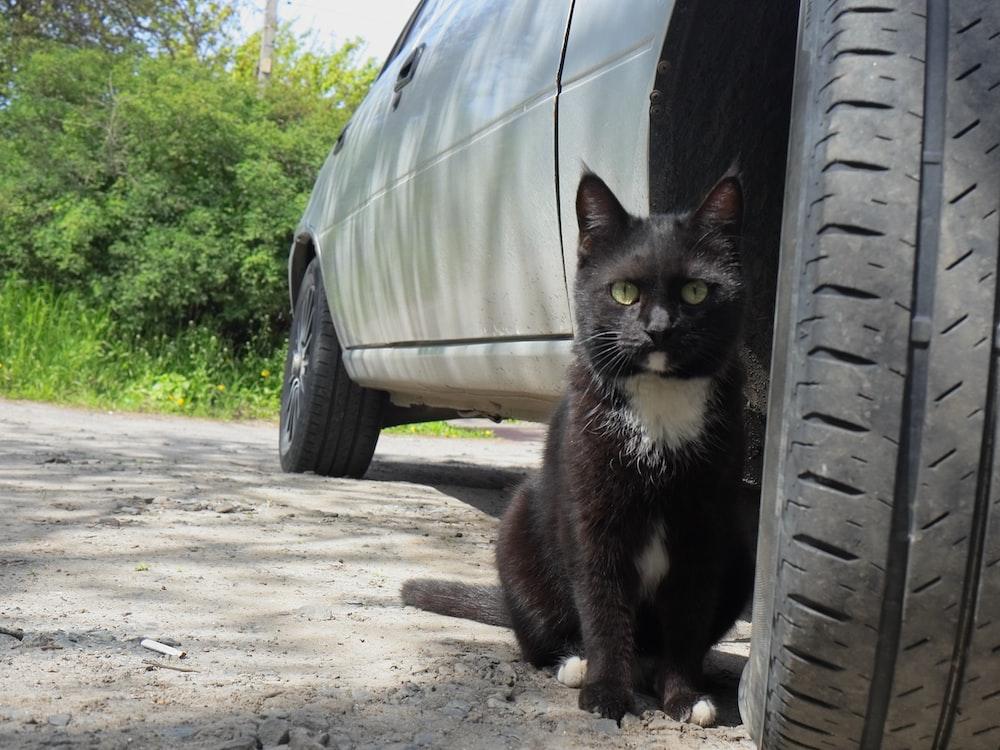tuxedo cat sitting on car hood during daytime