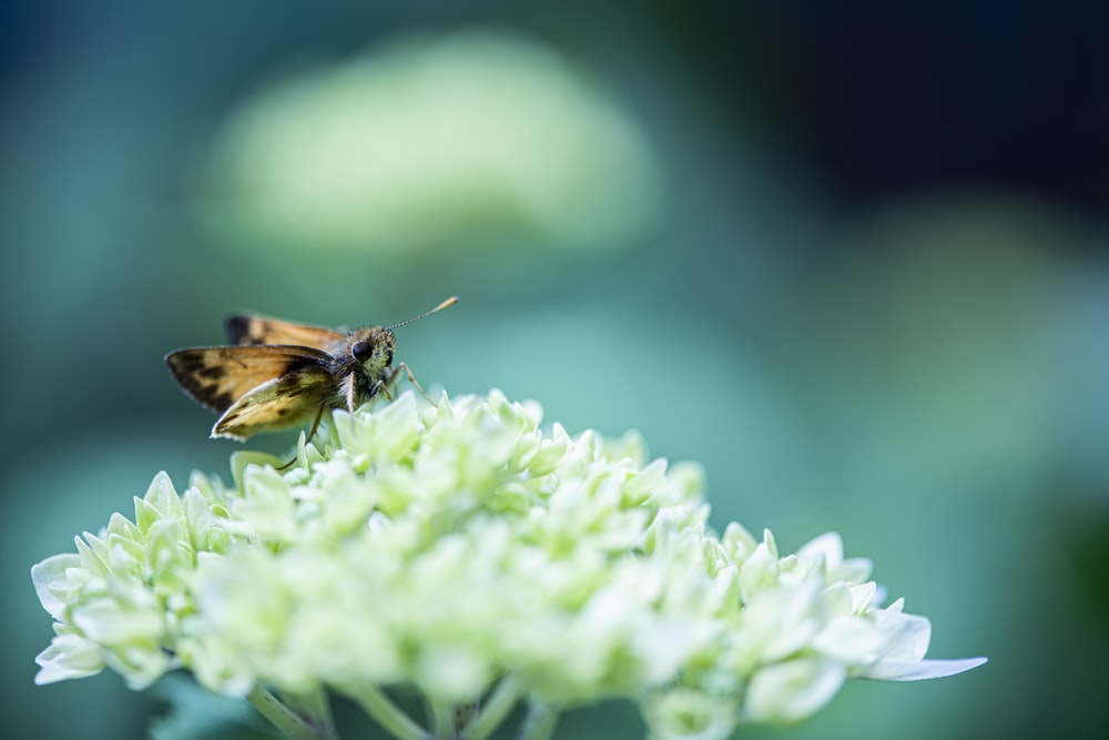 brown and black bee on green flower